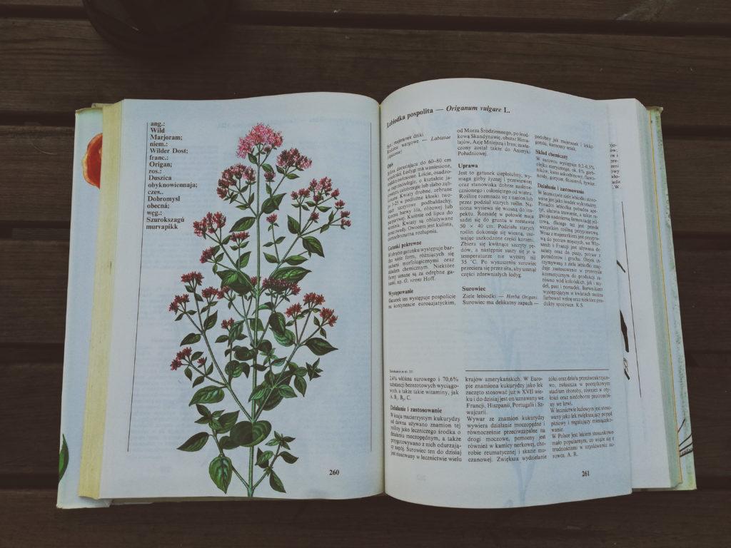 łopian leksykon roślin leczniczych korzeń napar odwar zielarka zielnik zielarz jak zrobić zioła wiedza nauka fitoterapia