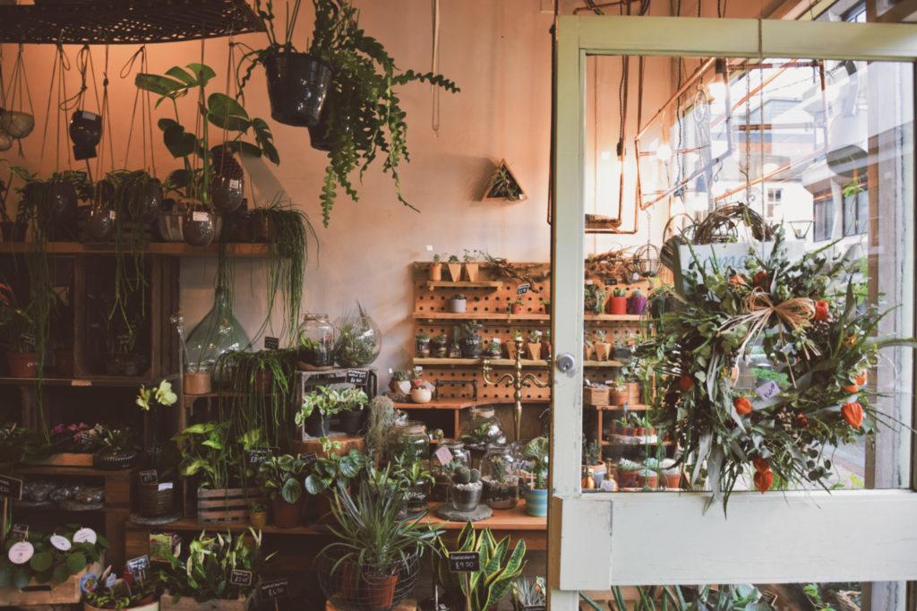 plantology Plantology, magiczny sklep z roślinami w Sheffield floristic flower shop nature sheffield uk places to see gdzie jechac co zobaczyc