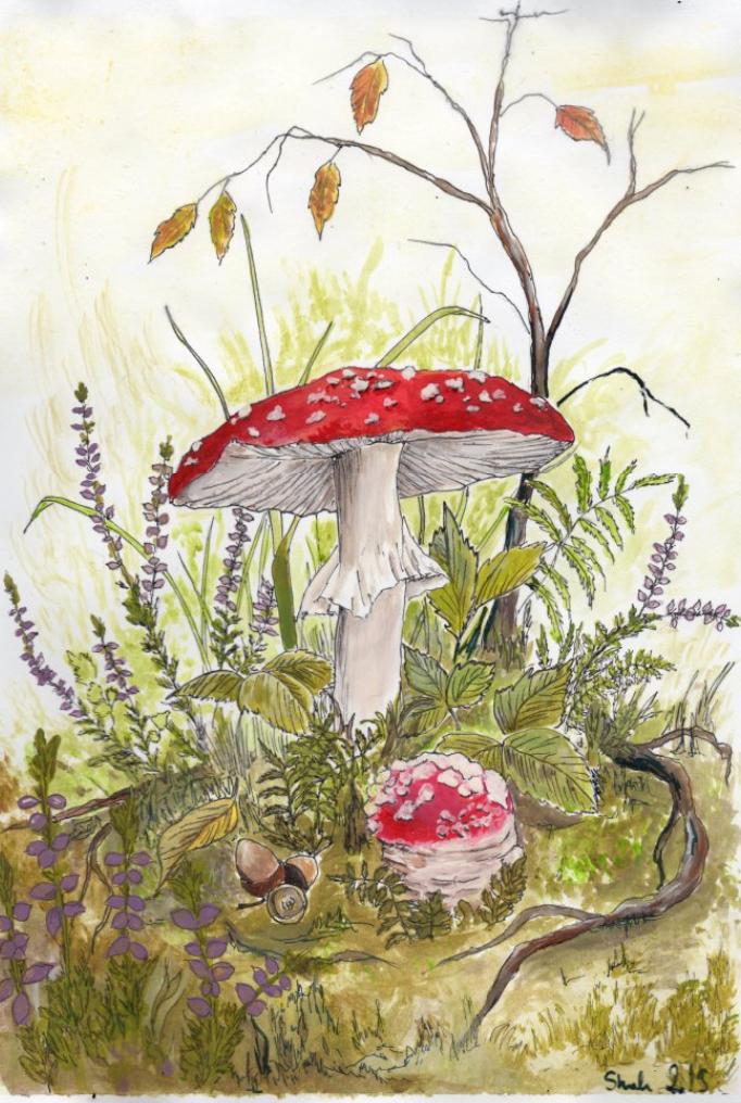 Rysunek autorstwa Shah Pogańskiej muchomor czerwony amanita
