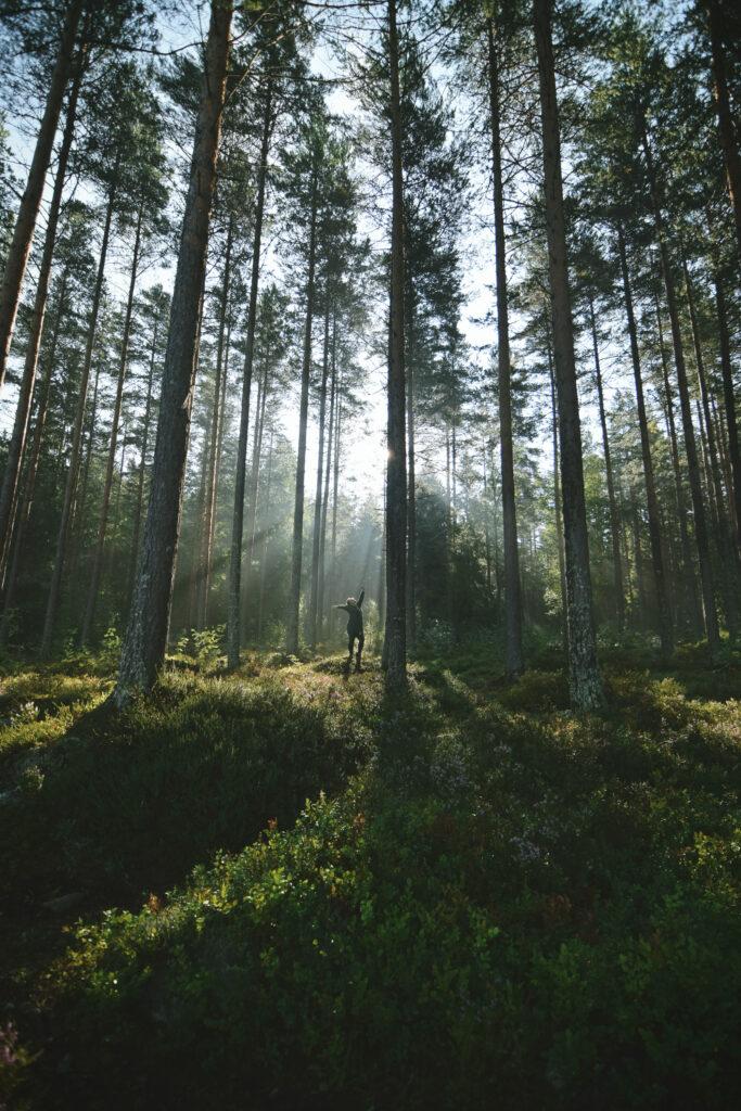 trylamnet outdoorexperten biwak outdoor gear szwecja new in sweden bivouac camping trekking hinking sweden jonna jinton