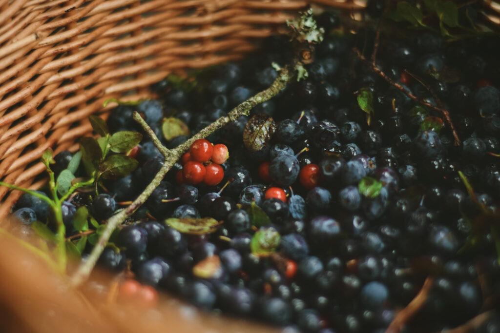 borówka bagienna pijanica brusznica jagody przetwory sezonowe na zimę